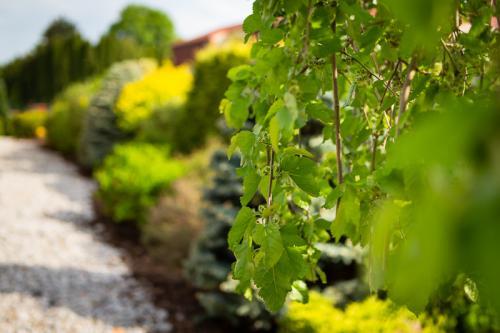 Zahradní zeleň.